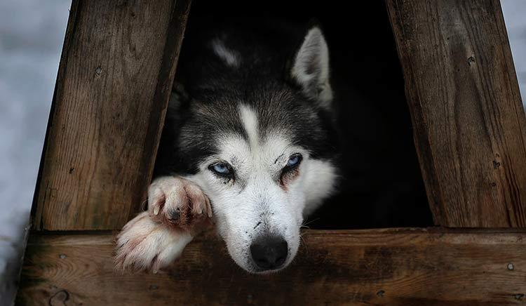 koira lapissa